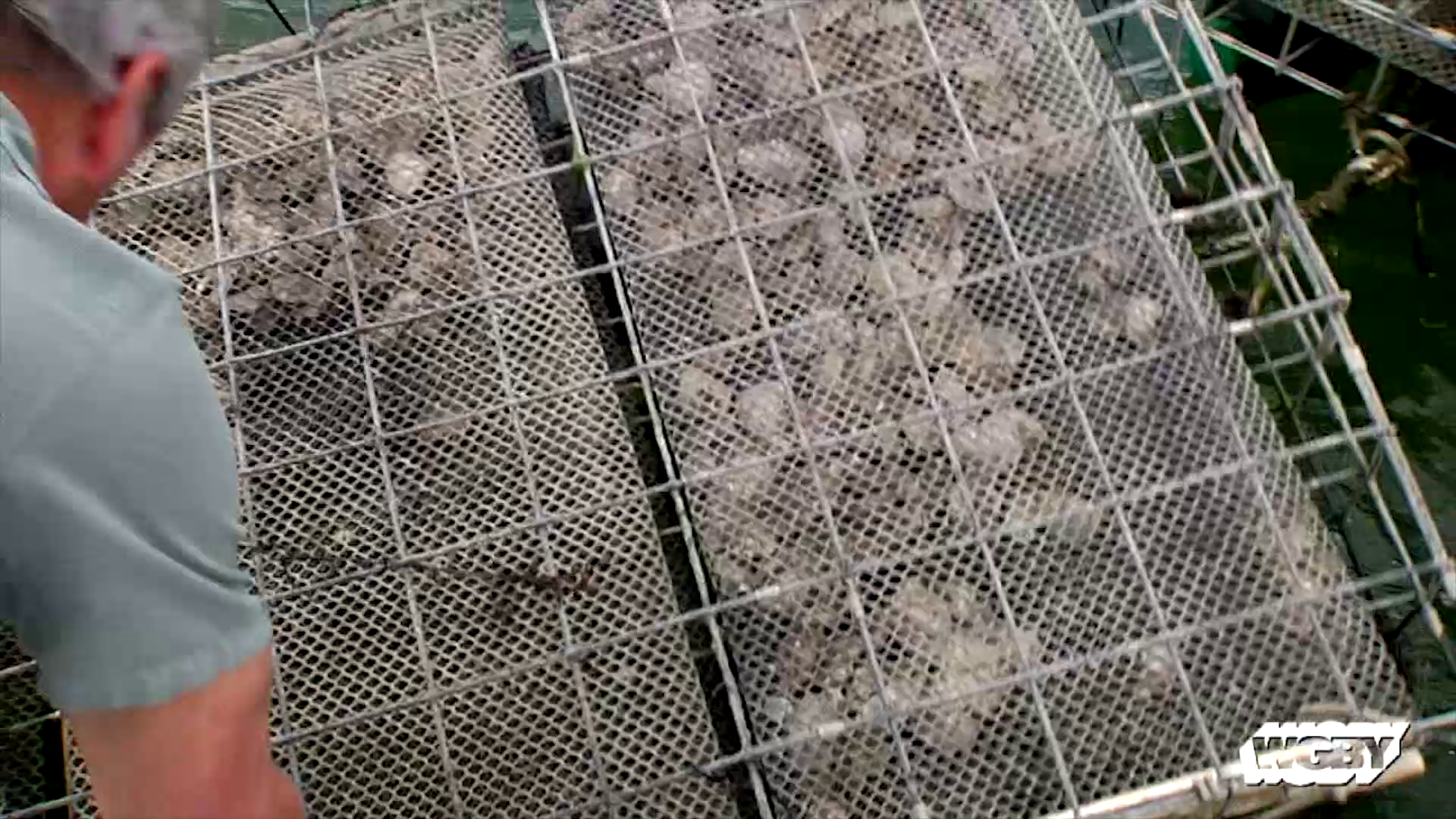 At a oyster farm in Maine, there's evidence that increasingly acidic ocean water is changing the make-up of one of New England's famous products–oysters.