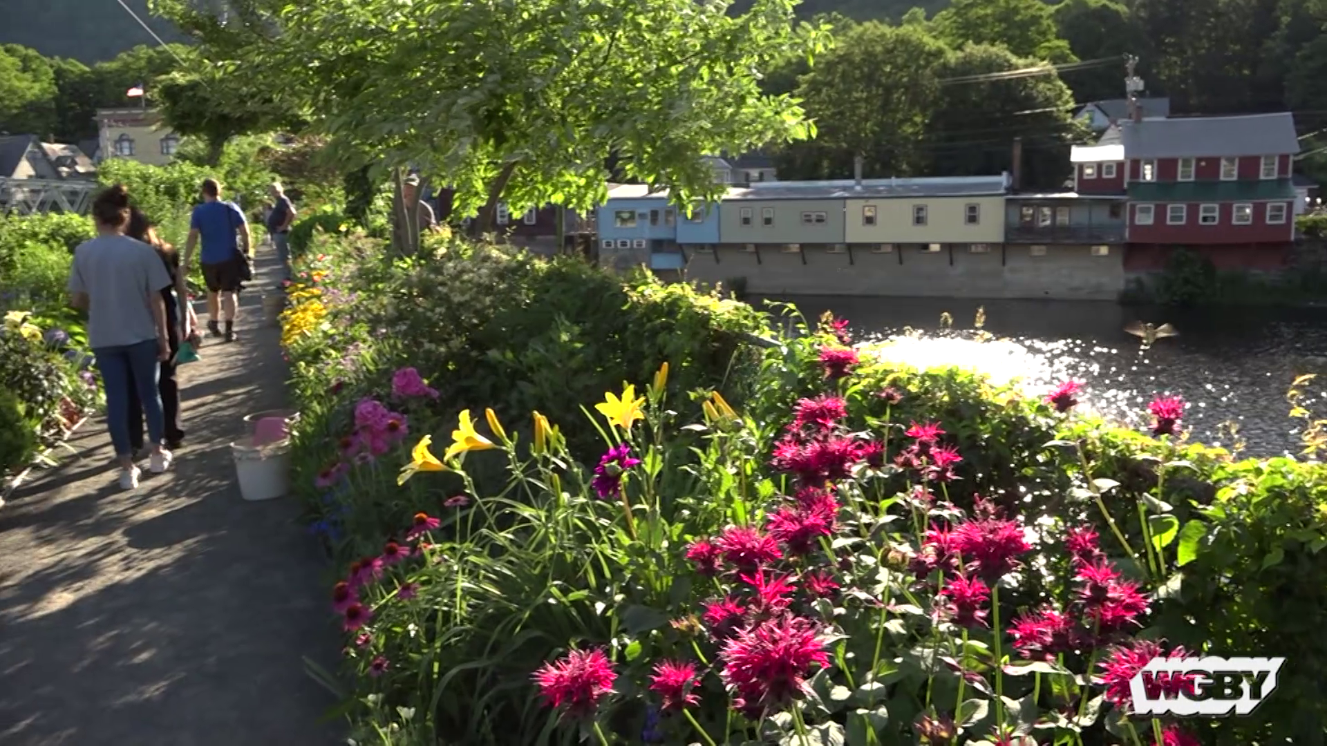 Learn how an unused trolley bridge connecting Shelburne Falls and Buckland, MA became a public garden experience known as the Bridge of Flowers.