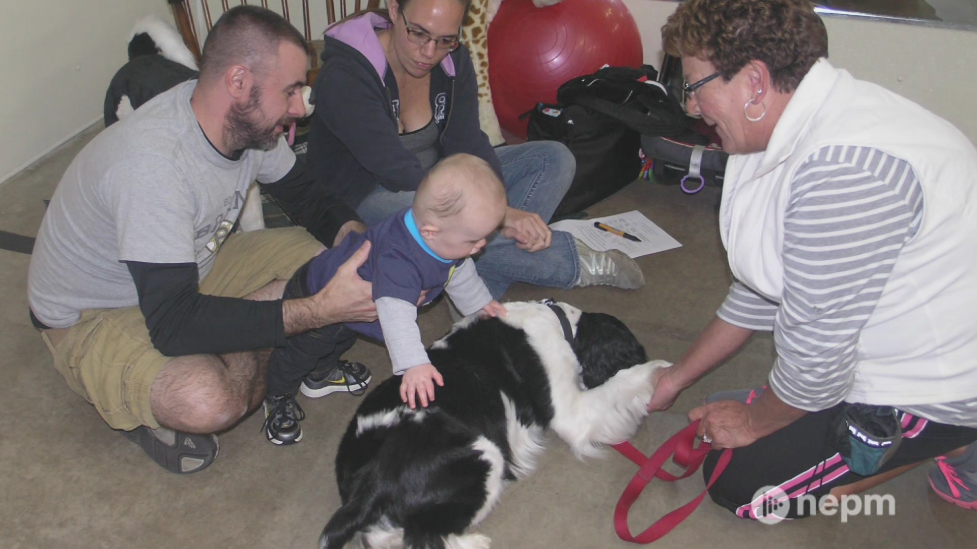How therapy dogs help in local communities