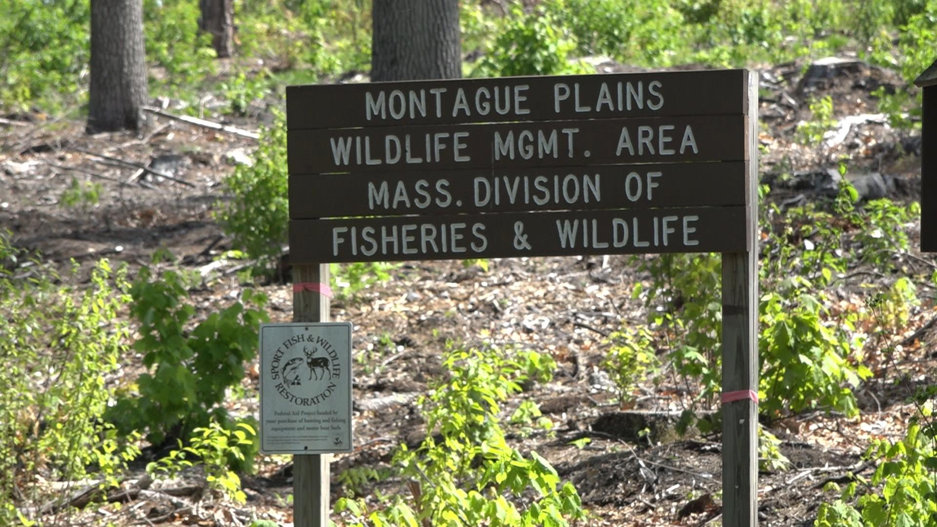 Montague Plains Wildlife Management Area