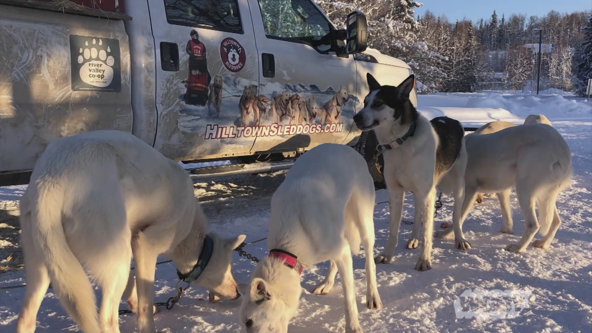 Sled Dog Racer Returns from Alaska During Pandemic