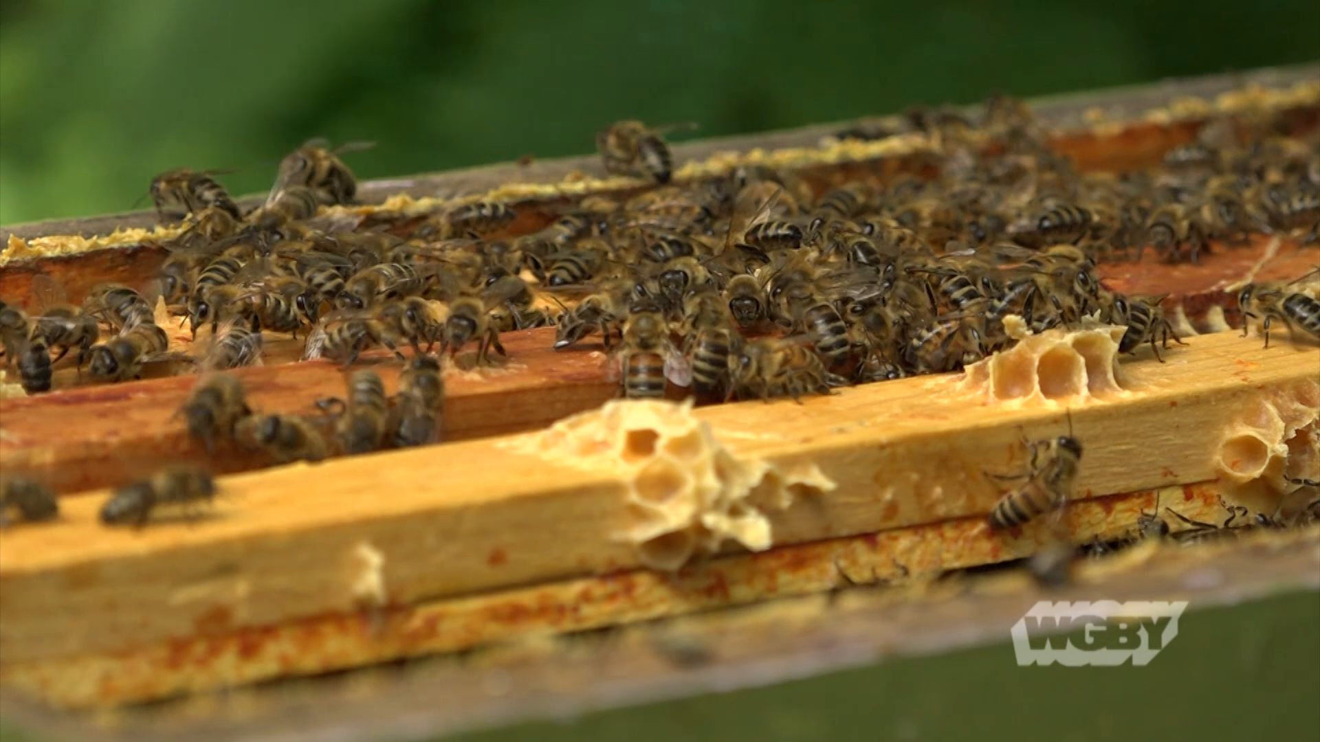 Western Mass Honey Beekeepers