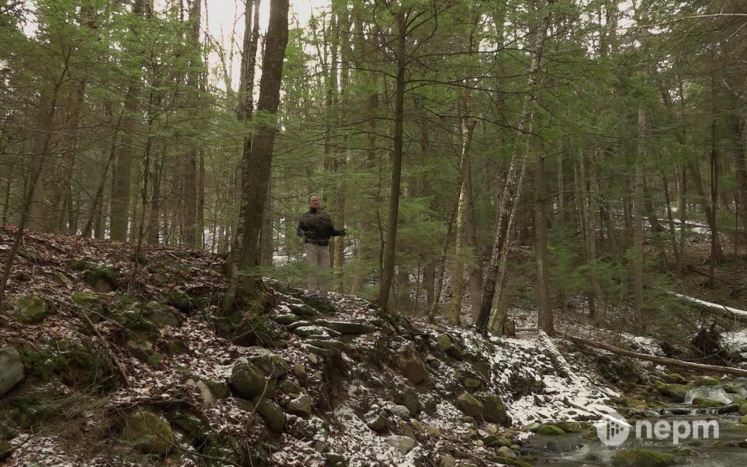 Windsor State Forest Will Reopen in Spring 2021