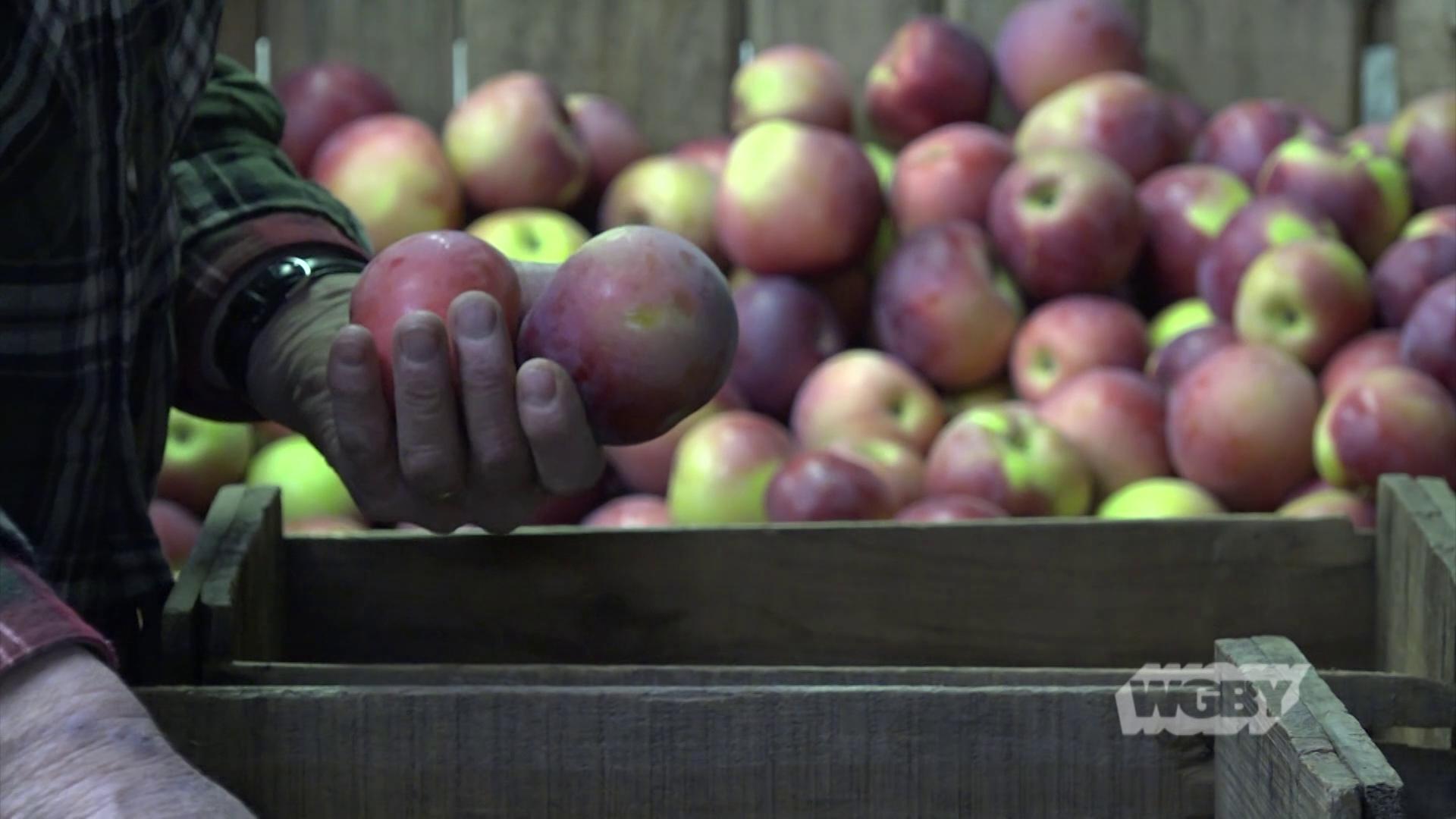 Winter Farmers Market, Pt.1: Meet the Farmers