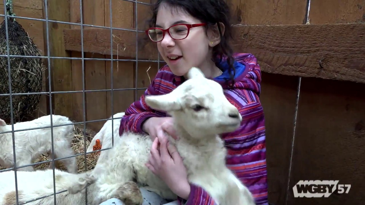 Western Massachusetts children interested in farming and agriculture can spend the summer at local CISA Farm Camps. CISA's Devon Whitney-Deal explains.