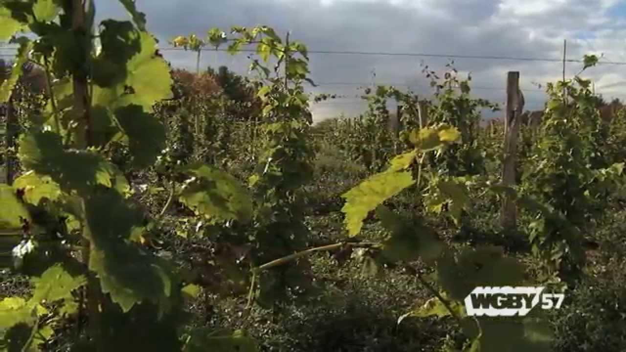 CISA: Wineries