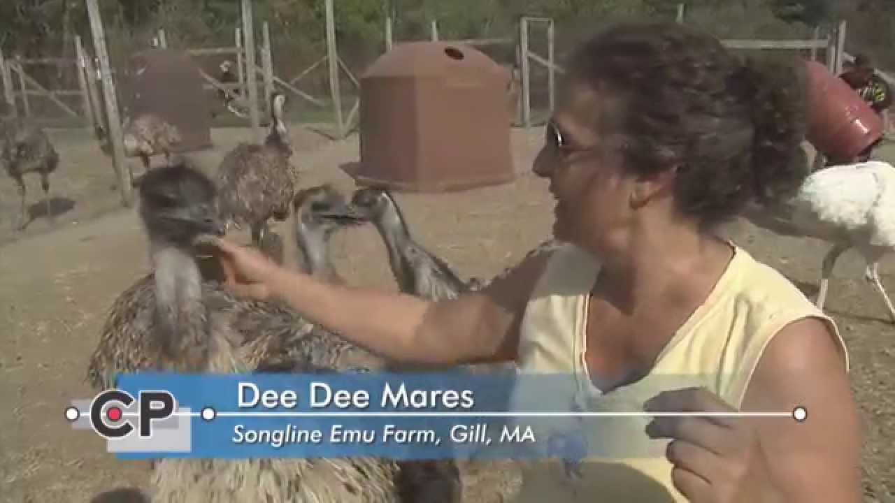 Life with Monte: Songline Emu Farm